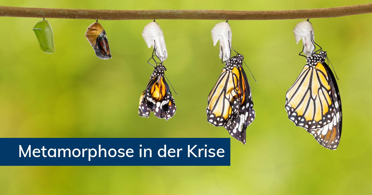 Metamorphose © Canva.com
